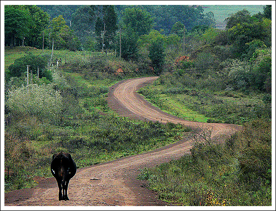 cow-path-original
